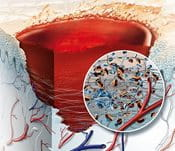 Illustration about blood clotting